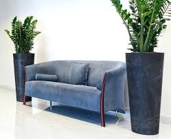 office indoor plants. Indoor Office Plants Green Stunning Plant Displays Singapore