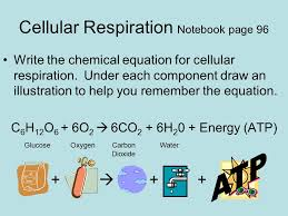 write the chemical equation for cellular respiration and