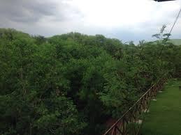 tree house jaipur. THE TREE HOUSE RESORT (Jaipur, Rajasthan) - Specialty Resort Reviews,  Photos, Rate Comparison TripAdvisor Tree House Jaipur