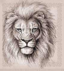 realistic lion face drawing. Wonderful Drawing Celtic Lion III By Synnabar  Inside Realistic Face Drawing A