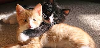 cat care urine marking main image jpg