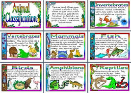 Animal Flow Chart Ks2 Ks2 Science Teaching Resource Animal Classification