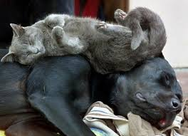 dog and cat love each other. Plain Other Dogs And Cats Can Love Each Other It Just Sometimes Has To Be Safely  Monitored In Dog And Cat Other