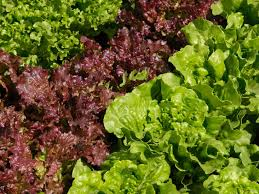 Lettuce Types Chart Romaine Lettuce Nutrition Calories And Recipes