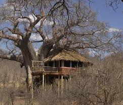 Luxury Treehouses In South Africa U2013 LionSandsGame U2026 U2013 Our Treehouse Hotel Africa
