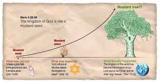 The Parable Of The Mustard Seed Bible Study Guide Bible