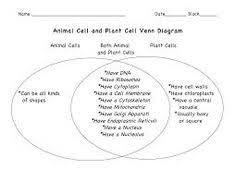 Angiosperm Vs Gymnosperm Venn Diagram Gymnosperms Vs Angiosperms Venn Diagram Under Fontanacountryinn Com