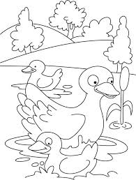 Small Picture 157 best Thema eenden kleuters Duck theme preschool Canard