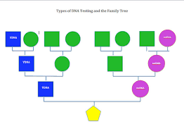 Green Dna Chart Dna Info
