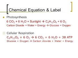 chemical equation label
