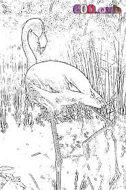 Flamant Rose Coloriage 600 Ovh
