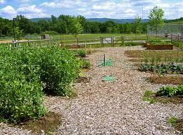 Small Picture Organic horticulture Wikipedia