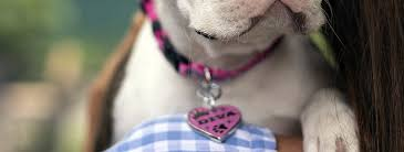 25% Off All <b>Dog ID Tags</b>   Personalized & Engraved ID Tags ...