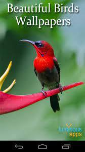 Beautiful Birds Live Wallpaper pour ...