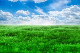 Green Grass And Blue Sky Free Stock Photo Public Domain Pictures