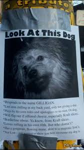 Lost Pet Flyer Maker Amazing Funny Missing Dog Posters Humor Dogs Humor Me Pinterest Funny