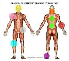 Body Diagram Physical Therapy Solutions