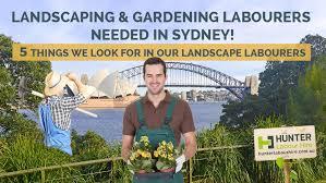 landscape gardening labourers needed in sydney
