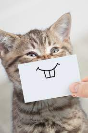 10 funny cats and cute kittens to get