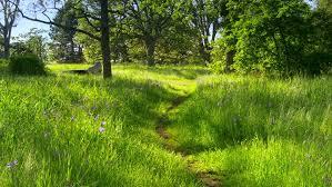 tall green grass field. 4K Dirt Path In Tall Green Field Grass, Outdoor Park Landscape, Spring Season - Grass O