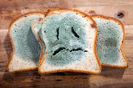 Can We Eat The Bread If It Has Some Mold Disficom