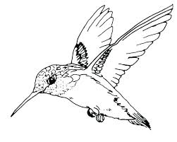 Bird Coloring Pages Free Trustbanksurinamecom