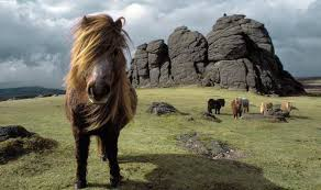 Image result for dartmoor