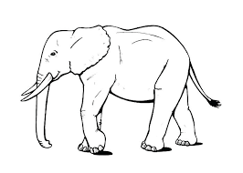 Indian Elephant Coloring Pages Printable Online Disney Princesses