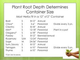 Herb Root Depth Chart Plant Root Depth Determines Container Size Most Herbs Fit In