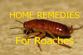 what are the most effective home remedies for cockroaches in the