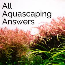 AAA - All Aquascaping Answers
