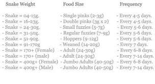 Corn Snake Food Chart Google Search Pet Snake Snake
