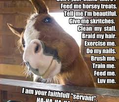 Beautiful Animal Quotes Best Of Top 24 Most Funniest Horse Quotes Funny Horse Quotes Horse And Animal