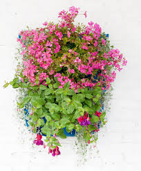 ballavaz modular wall planters add some colorful zing on the wall indoors or out they are self watering so just mount em any way you like and then take