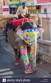 Asian elephant decorated for the festivals