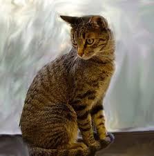 Feline Diabetes By Lisa A Pierson Dvm Cat Diabetes Cat
