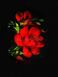 red flower on black background painting and computer collage stock ilration ilration