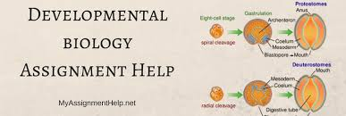 developmental biology assignment help regeneration ageing zoology developmental biology assignment help