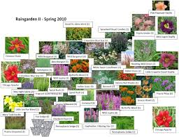 rain garden plants many images things to keep in mind while looking to grow rain garden