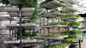 Vertical Farming Isnt The Solution To Our Food Crisis