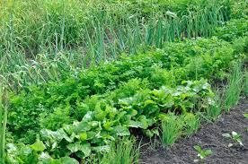 Crop Rotation Chart Vegetable Gardening Crop Rotation The Five Year Crop Rotation Plan