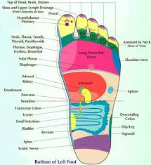 Left Foot Organ Chart Modern Institute Of Reflexology