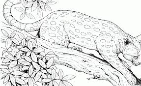 Cheetah Cat Hard Adult Animal Coloring Pages Printable