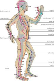 chronicles of student clinic asian theory cohutta healing arts Meridian Lines Body Map Meridian Lines Body Map #17 meridian lines body map