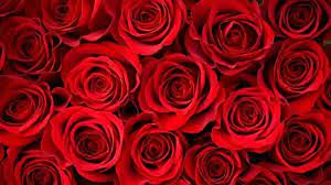 Red Flower Laptop Wallpapers - Top Free ...