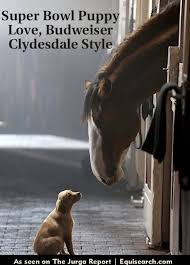 budweiser clydesdale super bowl