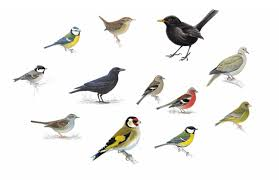 Garden Bird Identifier Chart 20 Birds To Spot In Your Garden And How To Attract Them In