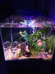 my tank is a 24x24x18 45 gallon and i have three small clown loaches four kuhli loaches a rainbow shark a pudgy catfish of some sort and ten or so neon