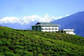 Temi Tea Estate Ravangla Sikkim
