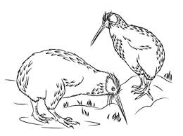 Small Picture Little Spotted Kiwi Bird Coloring Pages Download Print Online